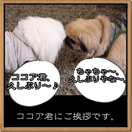 7_20120423115352.jpg