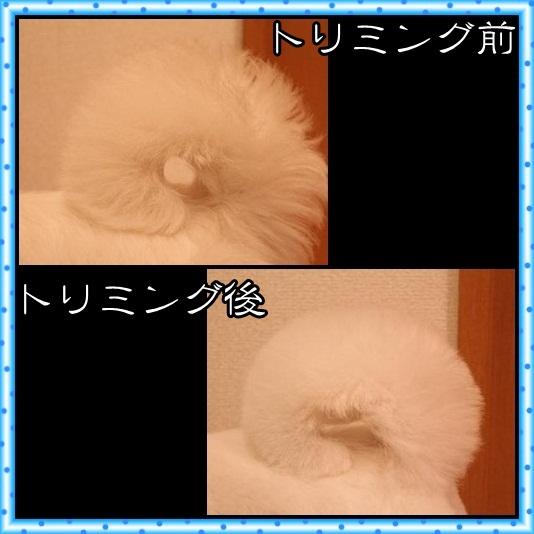 8_20120430073436.jpg