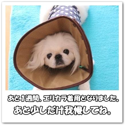 90_20120421142726.jpg