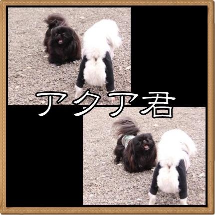 92_20120423115334.jpg