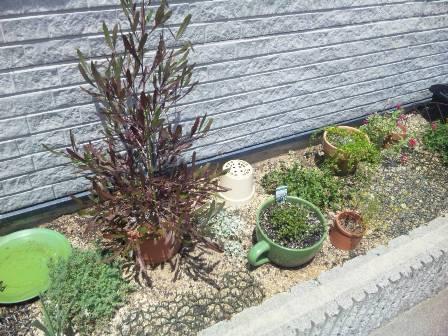 にゃーと花壇  ‐リベンジマッチ‐