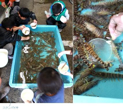 堺魚市場4