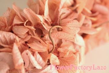 026_convert_20111201143329.jpg