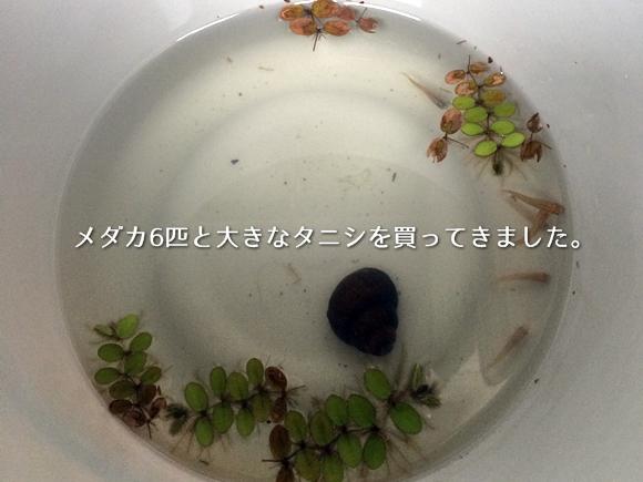 20140920-02.jpg