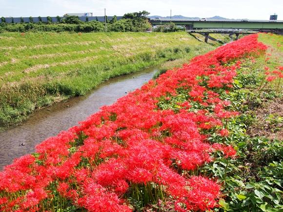 kakegawa-20140921-08s.jpg