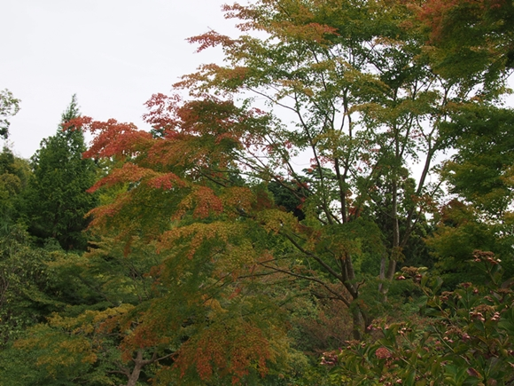 niji-20140915-08s.jpg