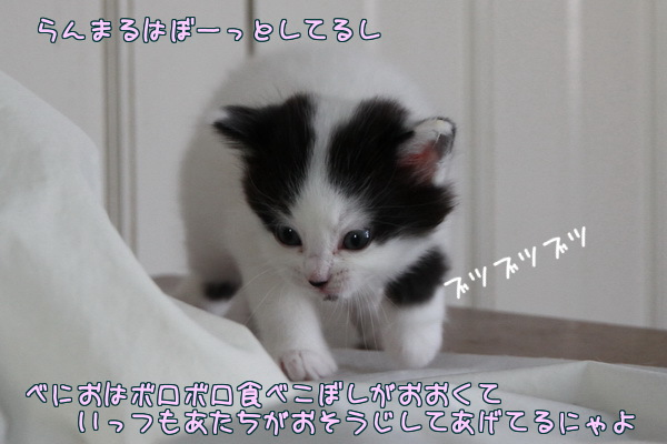 201302011231133c6.jpg