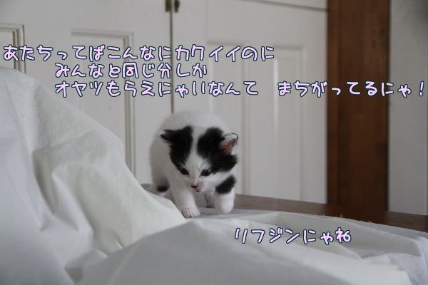 20130201124510af7.jpg