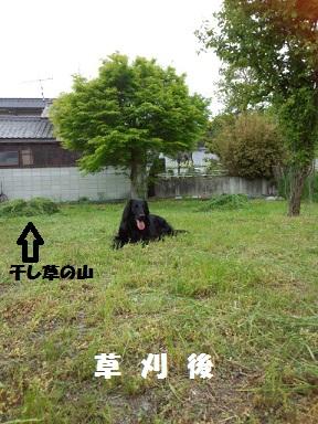 201356kusakarigo.jpg
