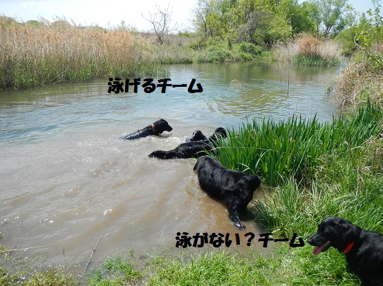oyoguoyoganai.jpg