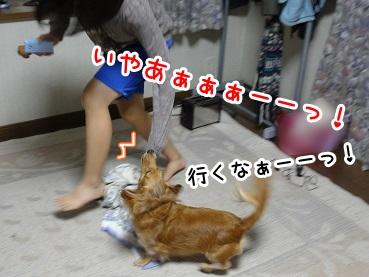 kinako930.jpg