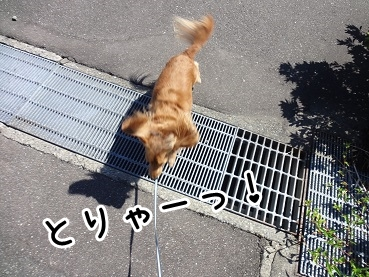 kinako941.jpg