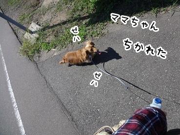 kinako942.jpg
