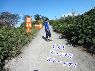 kinako961.jpg