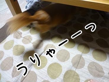 kinako971.jpg