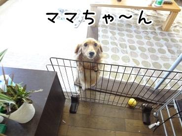kinako991.jpg