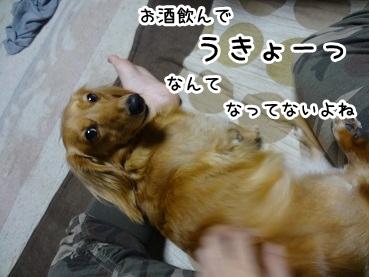 kinako992.jpg