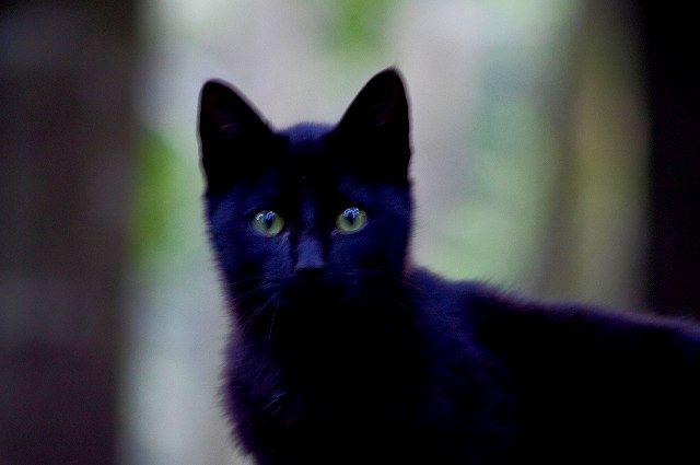 高尾山公園の猫ちゃん