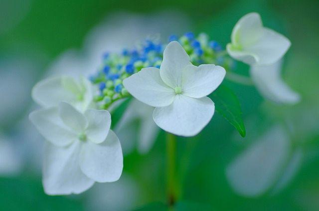 くじゅう野の花の郷