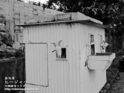沖縄,壁紙,山羊,ひーじゃー
