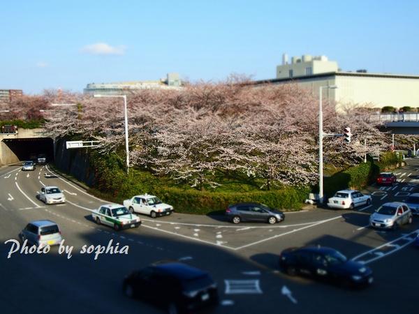 20130413空中庭園