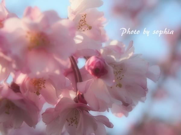 20130413空中庭園3
