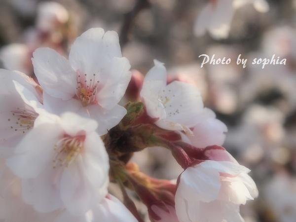 20130413空中庭園2
