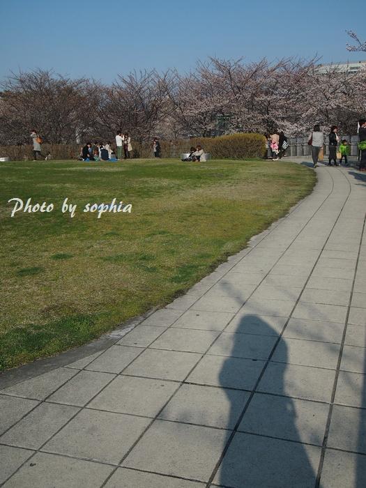 20130413sakura4.jpg