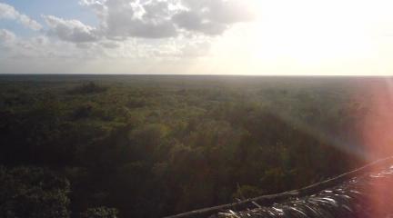 360度、密林の世界