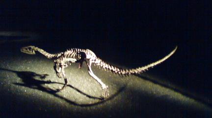 恐竜さん、こんにちは
