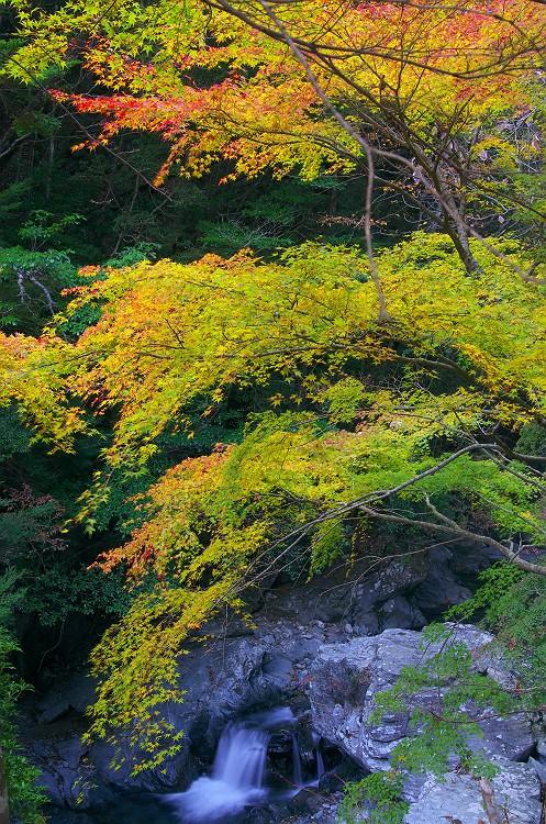 白倉峡の紅葉 1