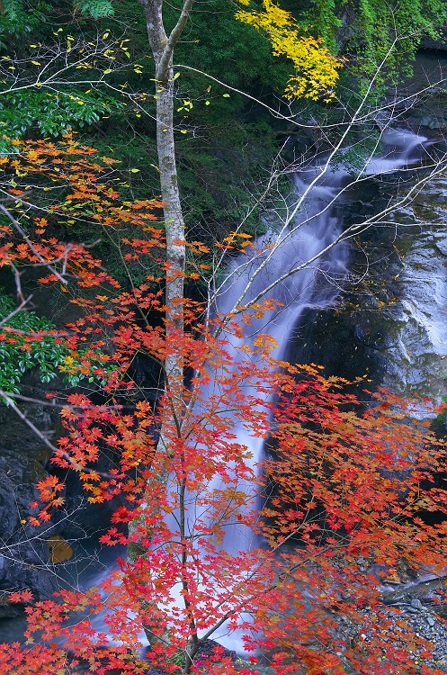 白倉峡の紅葉 2