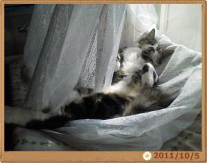 2011-10-04_091053041.jpg
