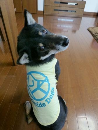 盲導犬サポートSHOP19