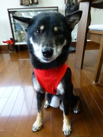 盲導犬サポートSHOP20