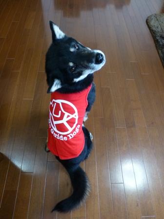 盲導犬サポートSHOP23