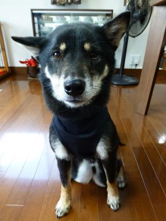 盲導犬サポートSHOP24