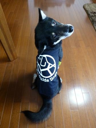 盲導犬サポートSHOP26