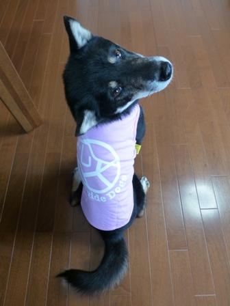 盲導犬サポートSHOP29