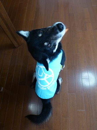 盲導犬サポートSHOP32