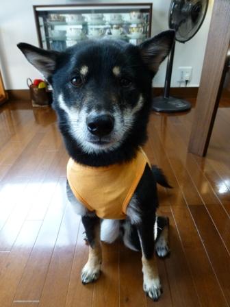 盲導犬サポートSHOP33