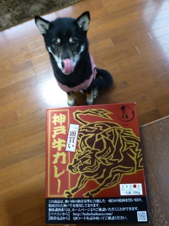 一頭買い神戸牛カレー1