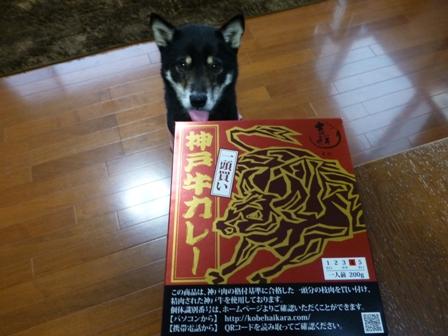 一頭買い神戸牛カレー2
