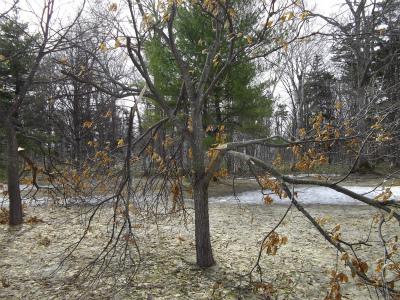 裂けた樹木