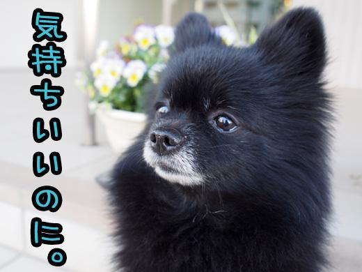 bokuhakimochiinoni.jpg