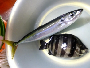 ムロアジ&チビイシダイ(幼魚)釣れたてのホッヤホヤ~♪はマイウ~ッツマイウ~でした♪くずれた台風一過の今日も午後から釣りに出かけます♪海が我らを呼んでいる~\(^o^)/2014.09.25