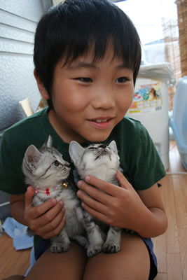 美幼女猫と玉太郎