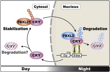 cell02.jpg