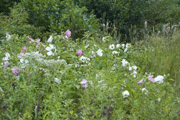 blog 140W Elfort, flowers, OH_DSC8469-8.22.09.(2).jpg